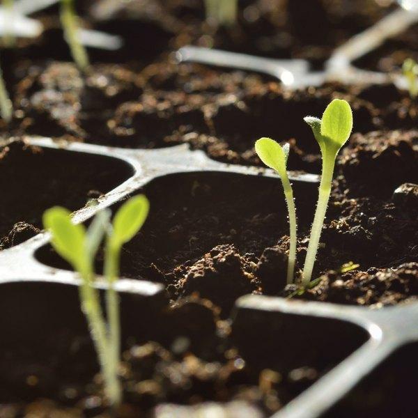 Uma única semente pode ser o início de uma bela horta urbana