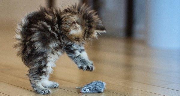 A los gatos les encantan los ratones de juguete.