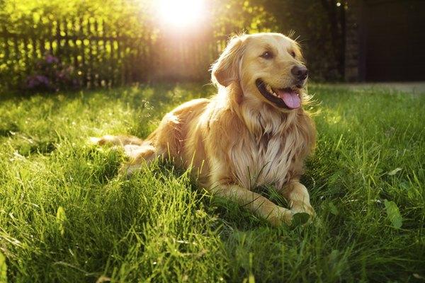 Se você já tem outros animais de estimação, escolha uma raça que conviva bem com eles