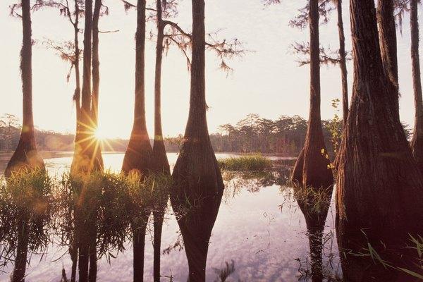 Há uma grande presença de metano em pântanos e mangues