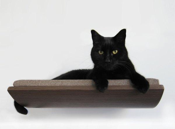 Puedes realzar la belleza de tu hogar con una cama para gatos.