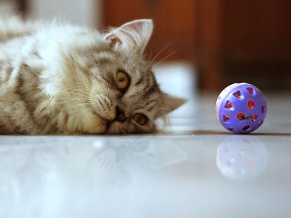 Tu gato se volverá loco con su pelota de cascabel.