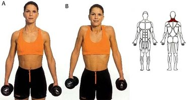 how to do neck exercises with dumbells  ehow