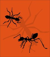 Strategically-applied citrus oils create a barrier against new ant invasions.