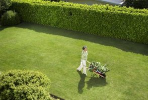 How to Kill Mole Lawn Tunnels