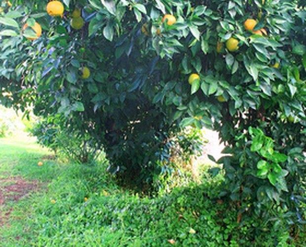 How to Sweeten Sour Oranges | LEAFtv