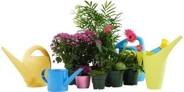 Protect your plants from fungus gnats by watering only when necessary.