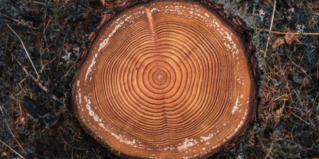 The five parts of a tree trunk provide protection, transport of nutrients and a place for growth in the woody interior.