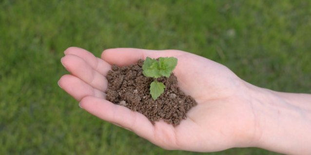 Soil provides structure, and nutrient and water holding capacity for plant roots.