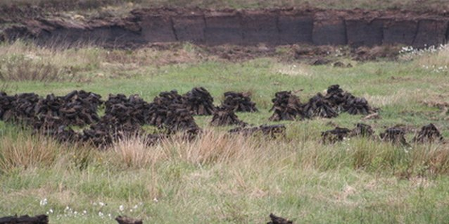 Sphagnum peat moss is harvested from bogs.