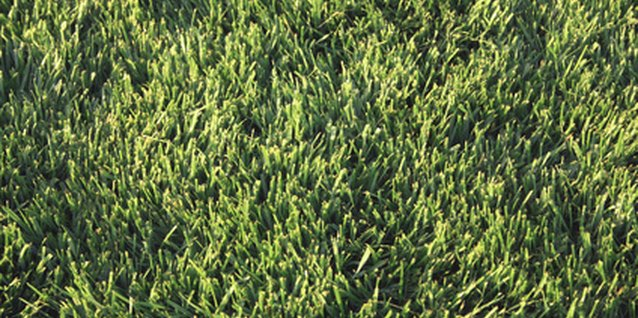 How to Restore a Lawn with Lots of Crabgrass