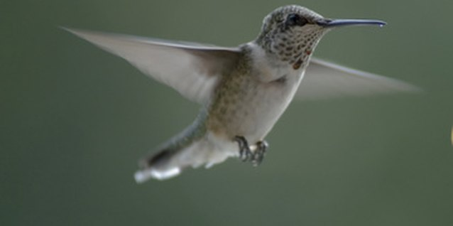 Hummingbirds add motion and beauty to a garden.