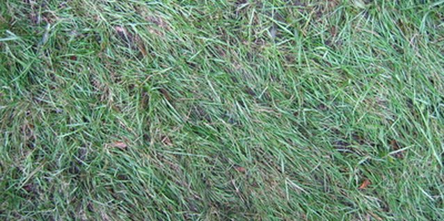 Reseed dead grass patches to repair your lawn.