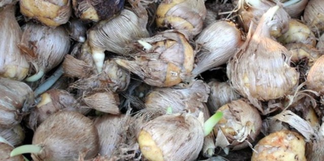 Plant your bulbs at the correct depth for the type.