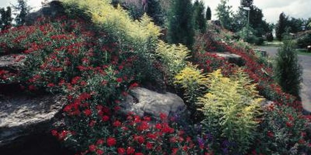 Low Maintenance Shrubs and Hillside Landscaping Ideas
