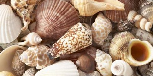 For best results, choose clean, unbroken seashells to decorate your chandelier.