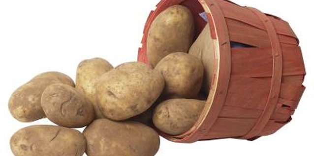 Potatoes grow above the plant roots but beneath the soil surface.