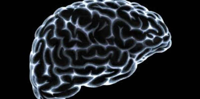 The brain contains 100 billion neurons at birth.