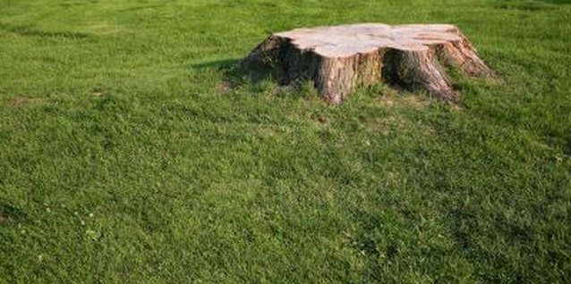 Grinding is one of the fastest ways to get rid of a stump in your yard.