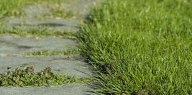 Without edging, a lawn's grass will grow over stone walks.