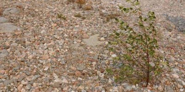 How to Keep Weeds From Growing Through the Pea Gravel