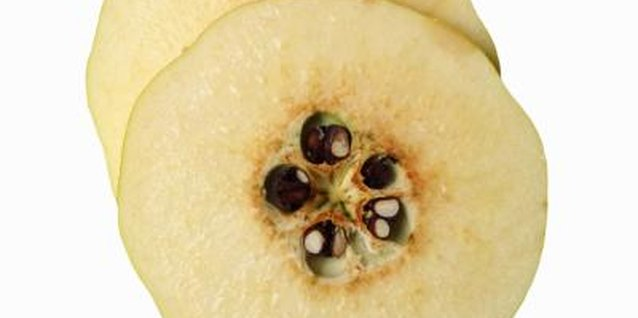 Remove seeds from the inside of the flowering quince fruit for propagation.