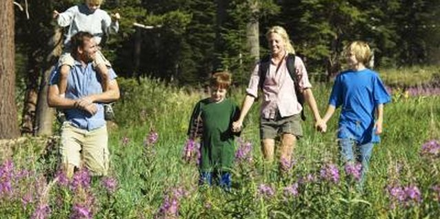The San Francisco Peninsula offers kid-friendly hikes through forest, grasses and wetlands.