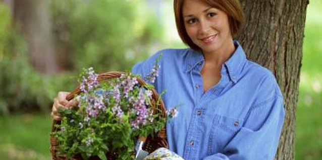 Baskets make attractive planters for spring flower arrangements.