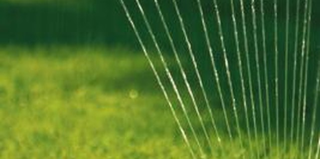 Watering the lawn improves the health of the grass.