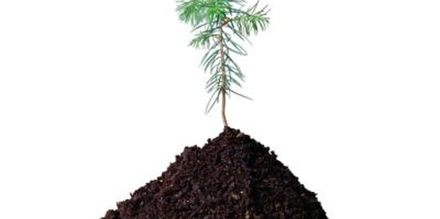 Potting soil can contain a confusingly wide range of ingredients.