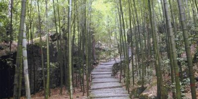Without a barrier, bamboo spreads.