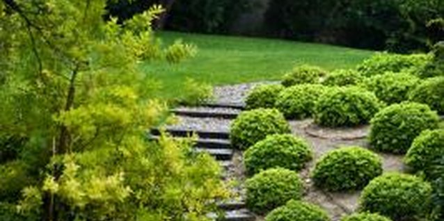 Combining greenery with hardscaping creates a balanced appearance.