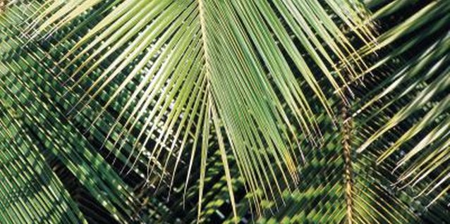 The waving palm branches symbolized recognition of Jesus as a victorious king.
