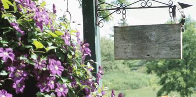 How to Get Seeds From Clematis Vines