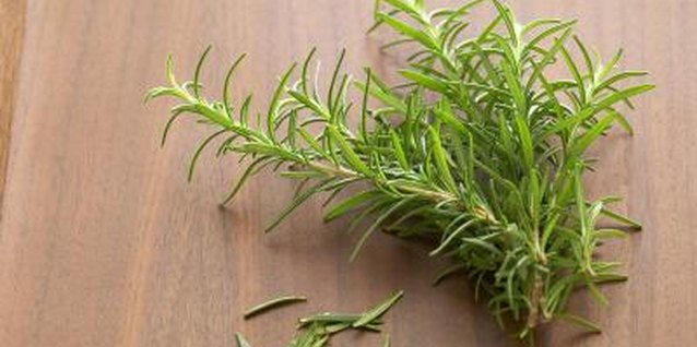 How to Keep a Rosemary Bush Alive Indoors