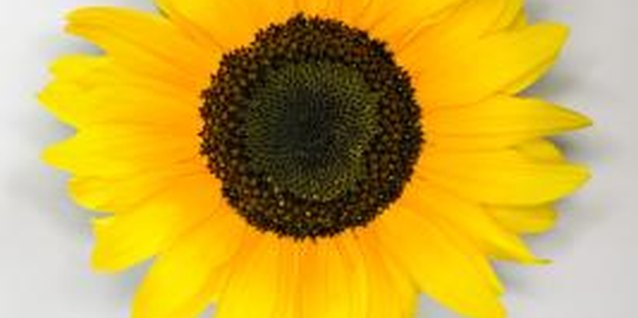 Bring a little sunhine into your home with sunflower activities.