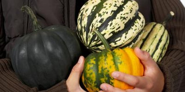 Squashes range in size, shape and color.