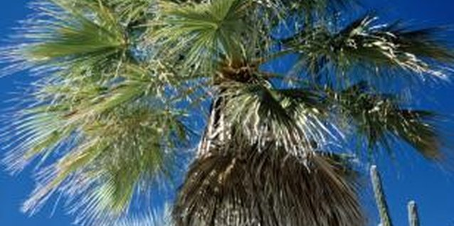 Palms can bring much-needed shade to a house.