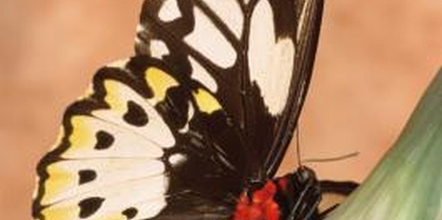 Activities on Metamorphosis for Kids