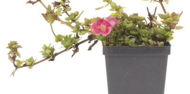 Your favorite annuals can hang in style in a hanging flower bag.