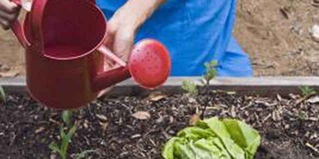 Advantages & Disadvantages of Raised Beds