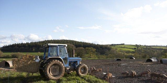 Cómo obtener dinero de subvención para comenzar una granja