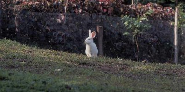 Companion Plantings to Deter Rabbits