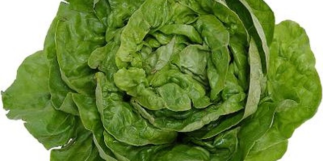 Although rare, some types of lettuce can cause allergic reactions.