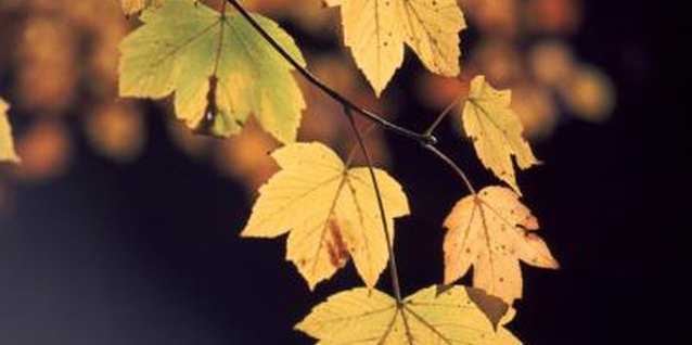 Drought can cause tree leaves to die.