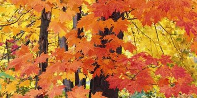 The brilliant fall color of leaves can be a vivid lesson for kids.