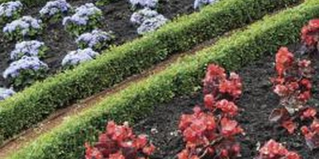 Garden Ideas With Box Hedging