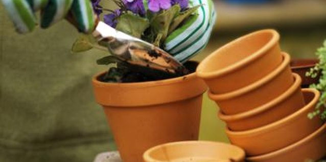 Save money by reusing your used potting soil.