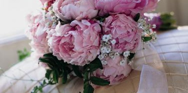 Peony has been grown in English gardens for centuries.