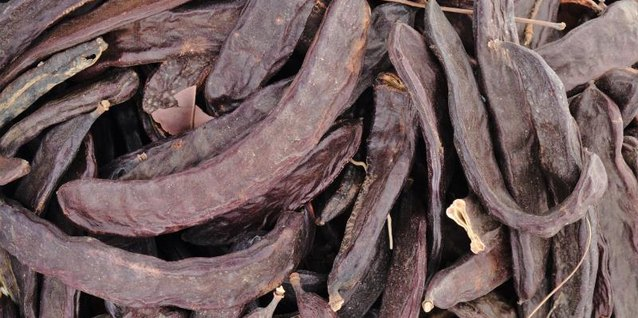 How to Pot Carob Tree Seeds